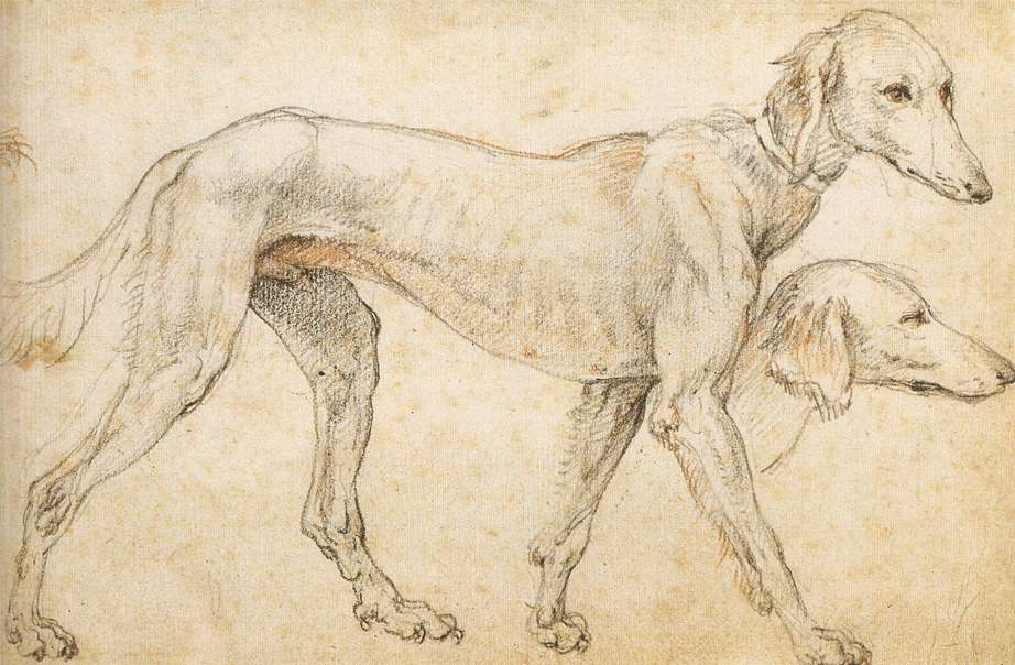 Studies of a Greyhound
