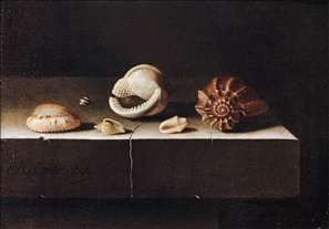 Five Shells on a Slab of Stone