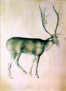 Stag (from a sketch-book)