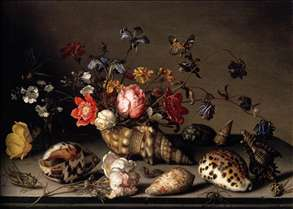 Still-Life of Flowers, Shells, and Insects