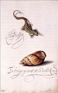 Lizard and Shell