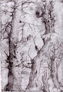 Studies of Trees