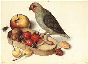 Still-Life with Pygmy Parrot