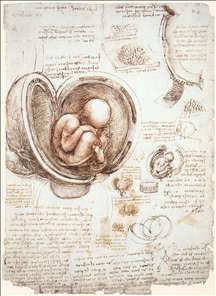 Studies of embryos